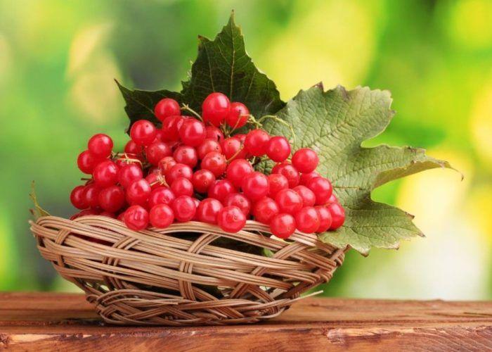 Плоды калины