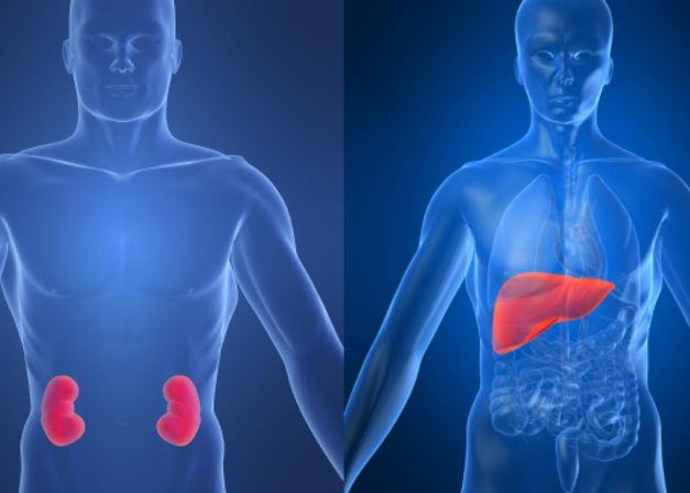 Хронические заболевания печени и почек