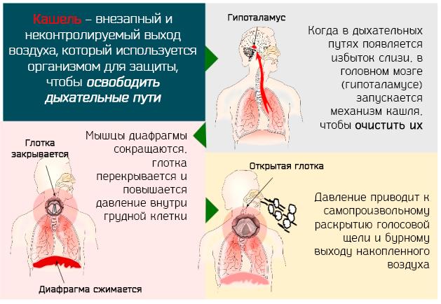 Может ли мокрый кашель перейти в сухой