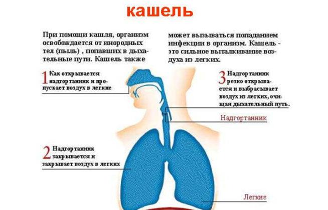 Причины появления кашля у новорожденных