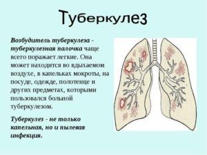 Жир медведя применяют при туберкулезе