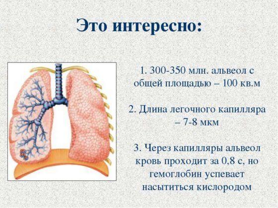 Поражениях дыхательных альвеол