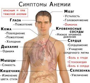 Симптомом бронхита является анемия