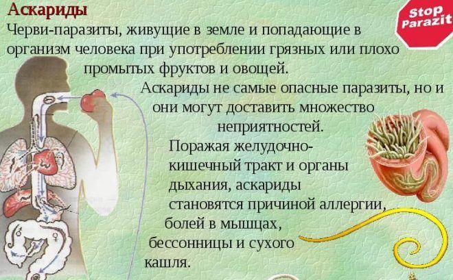 Аскариды