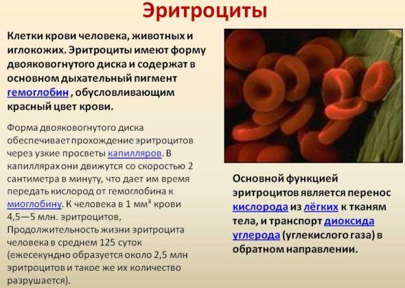 Эритроциты