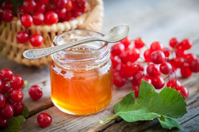 Калина с медом для лечения патологий