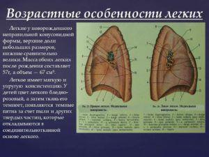 Особенности строения левого лёгкого