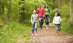 Прогулки в лесу ускорят выздоровление
