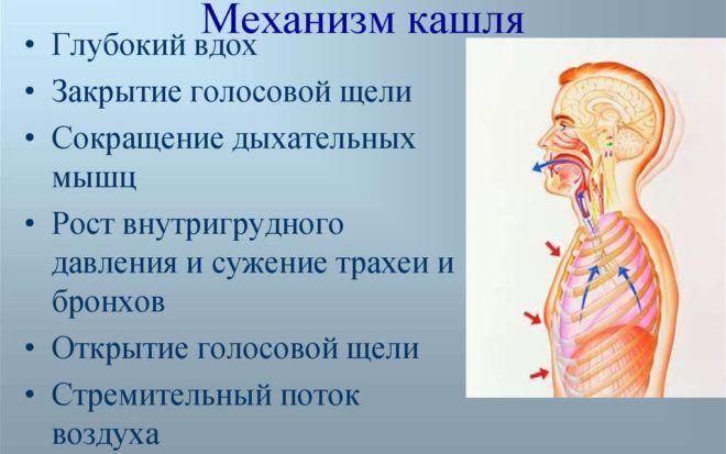 Редкий кашель