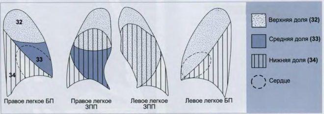В верхнюю долю входит пять (S1–5