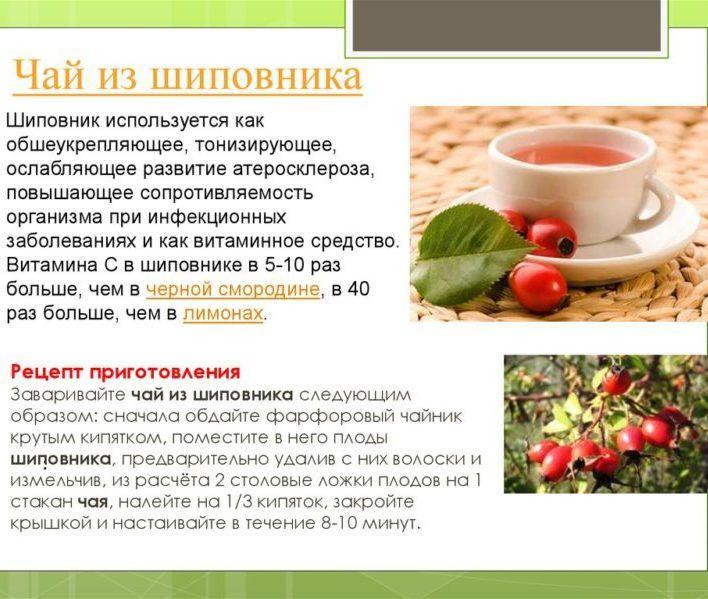 Рецепт шиповника от простатита простатит учебник