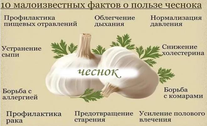 Факты о чесноке