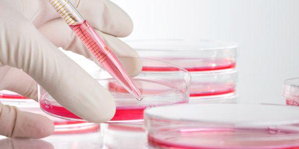 Лабораторное исследование крови для диагностики трахеита