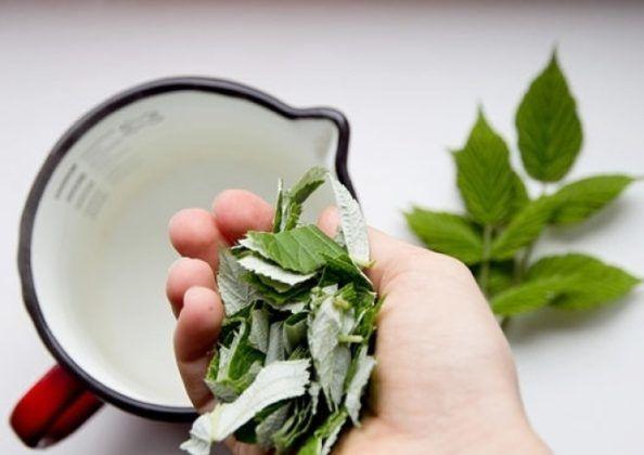 Отвар веток малины с листьями для лечения кашля