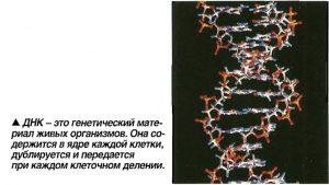 Диагностика ДНК паразитирующего грибка в организме