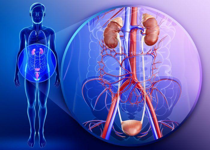 Инфекции мочеполовой системы