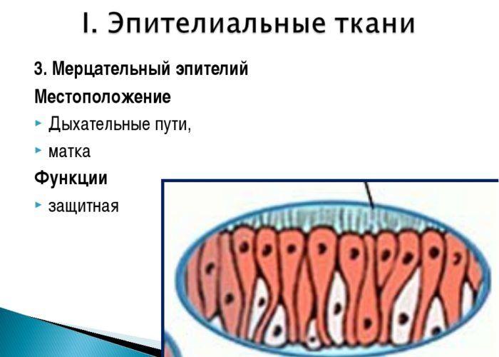 Нарушения работы мерцательного эпителия