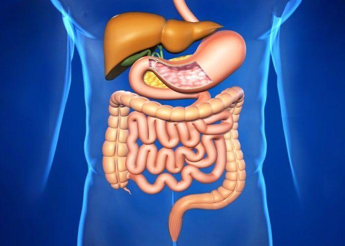 Патологии пищеварительной системы