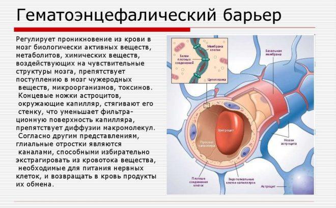 Гематоэнцефалический барьер