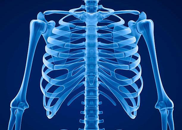 Горизонтально расположенные ребра