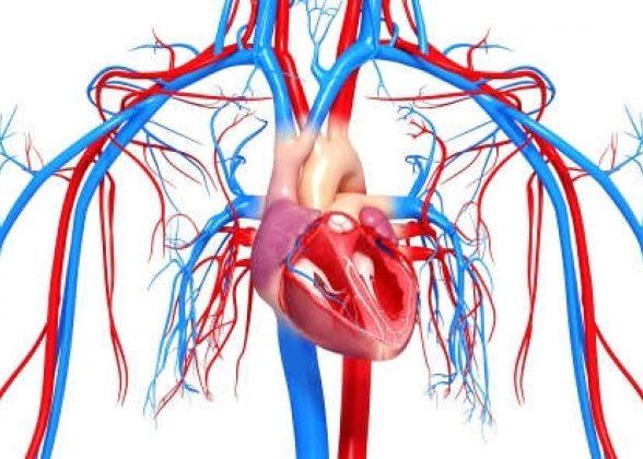 Нарушение функционирования сердечно-сосудистой системы