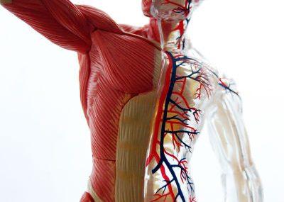 При длительном применении теряется тонус мышечной структуры конечностей