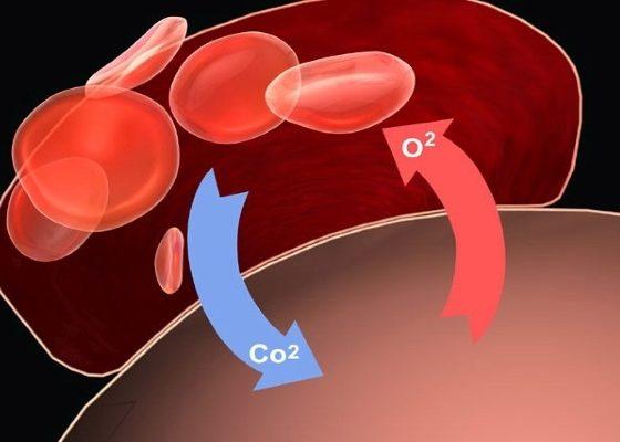Улучшение усвоения кислорода в тканях