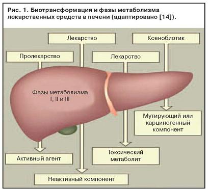 В печени осуществляется метаболизм медикаментозного средства