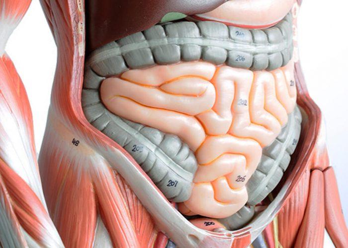 Заболевания области пищеварительной системы