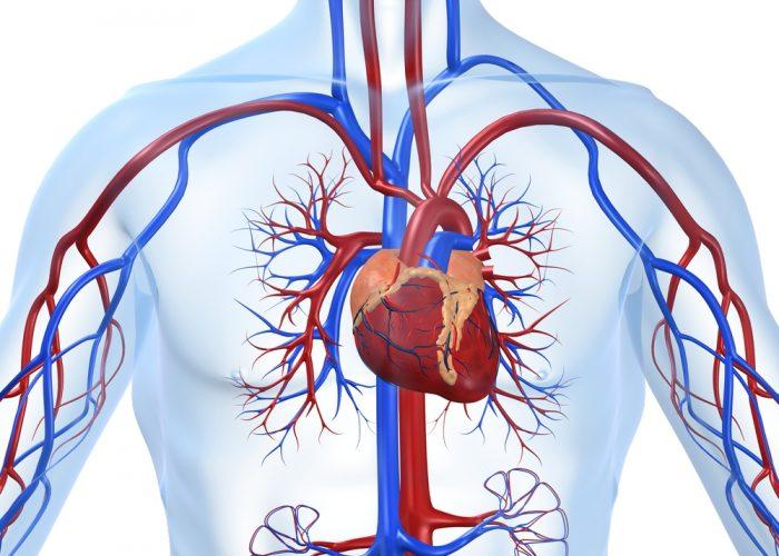 Тяжёлые болезни сердца и сосудов