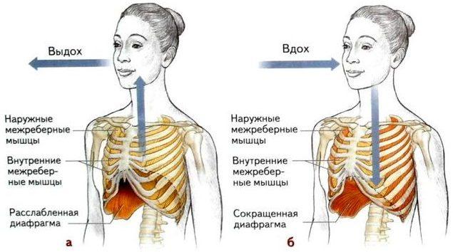 Тренировка межреберных мышц