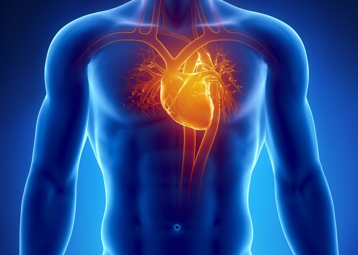 Заболевания сердечно-сосудистой системы