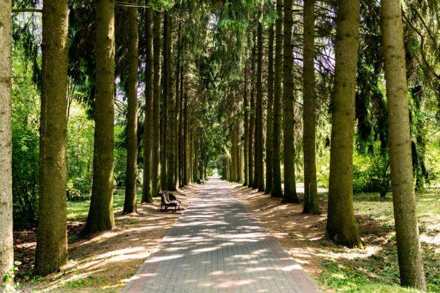 хвойный лес для астматиков